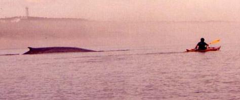 Quebec whale cedar strip kayak Ann DeMuth